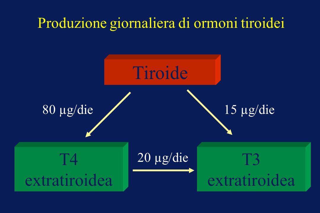 Produzione giornaliera di ormoni tiroidei Tiroide T4 extratiroidea T3 extratiroidea 80 µg/die15 µg/die 20 µg/die