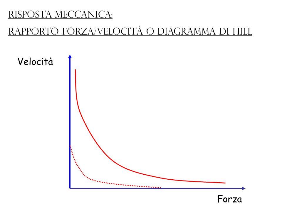Forza Velocità Risposta meccanica: rapporto forza/velocità o Diagramma di Hill