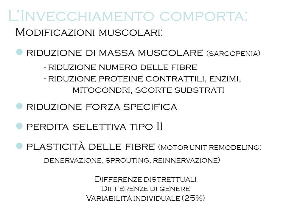 Modificazioni muscolari: riduzione di massa muscolare (sarcopenia) - riduzione numero delle fibre - riduzione proteine contrattili, enzimi, mitocondri
