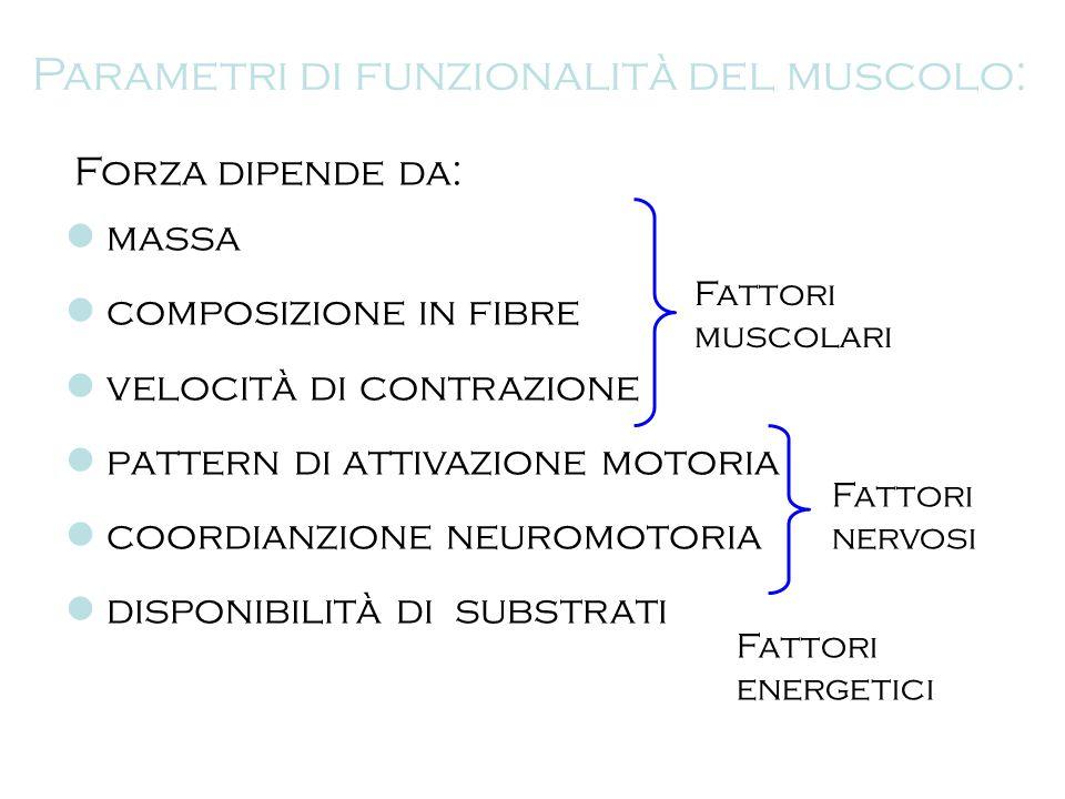 Parametri di funzionalità del muscolo: Forza dipende da: massa composizione in fibre velocità di contrazione pattern di attivazione motoria coordianzi