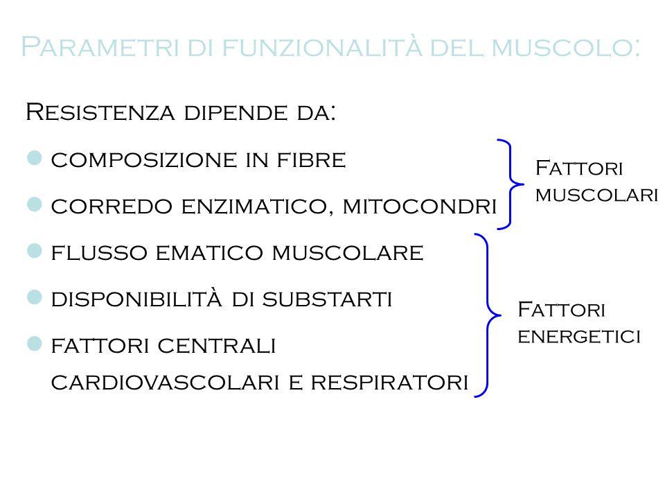 Parametri di funzionalità del muscolo: Resistenza dipende da: composizione in fibre corredo enzimatico, mitocondri flusso ematico muscolare disponibil