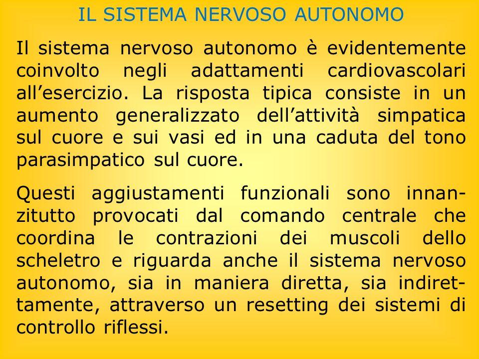 IL SISTEMA NERVOSO AUTONOMO Il sistema nervoso autonomo è evidentemente coinvolto negli adattamenti cardiovascolari allesercizio. La risposta tipica c