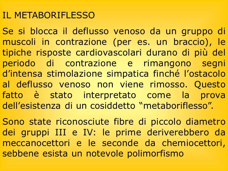 IL METABORIFLESSO Se si blocca il deflusso venoso da un gruppo di muscoli in contrazione (per es. un braccio), le tipiche risposte cardiovascolari dur