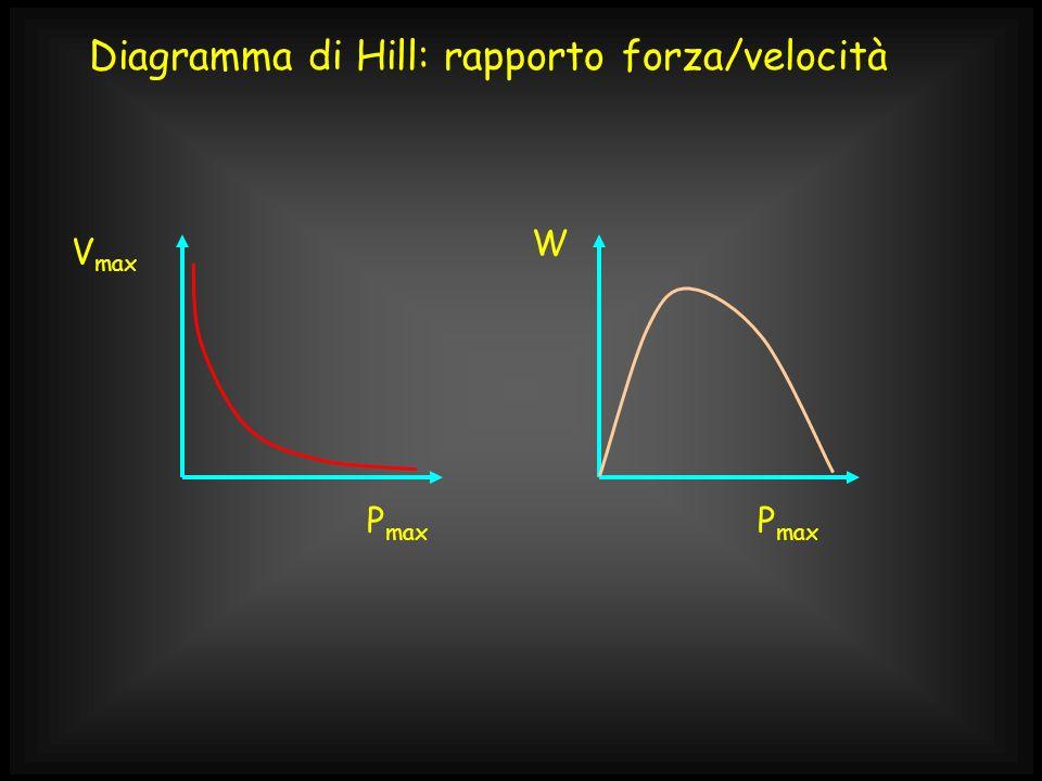 V max P max W Diagramma di Hill: rapporto forza/velocità