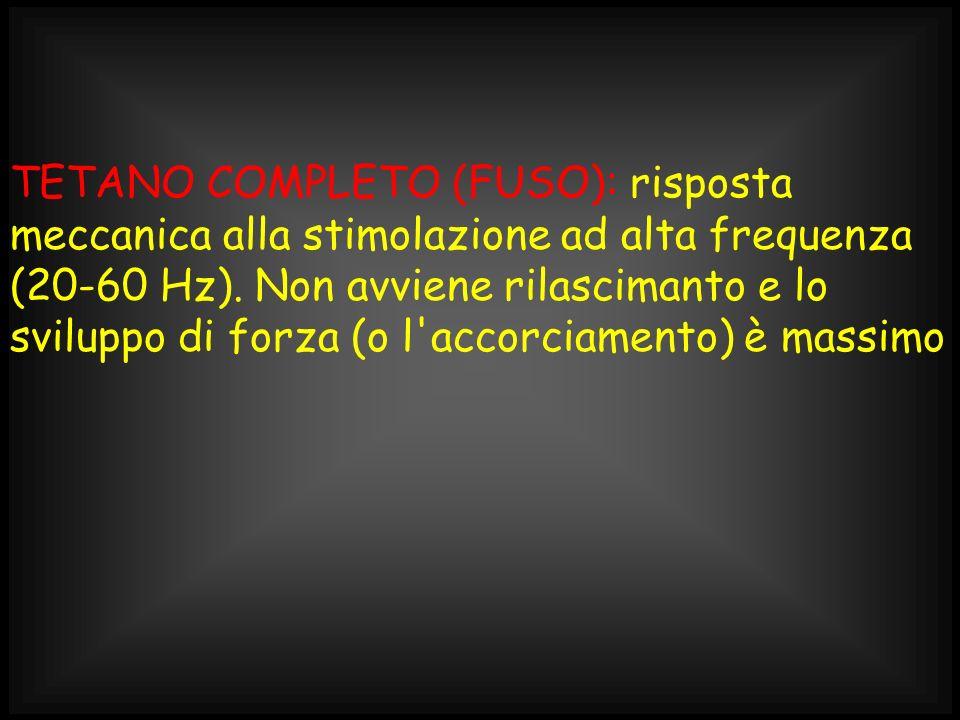 TETANO COMPLETO (FUSO): risposta meccanica alla stimolazione ad alta frequenza (20-60 Hz). Non avviene rilascimanto e lo sviluppo di forza (o l'accorc