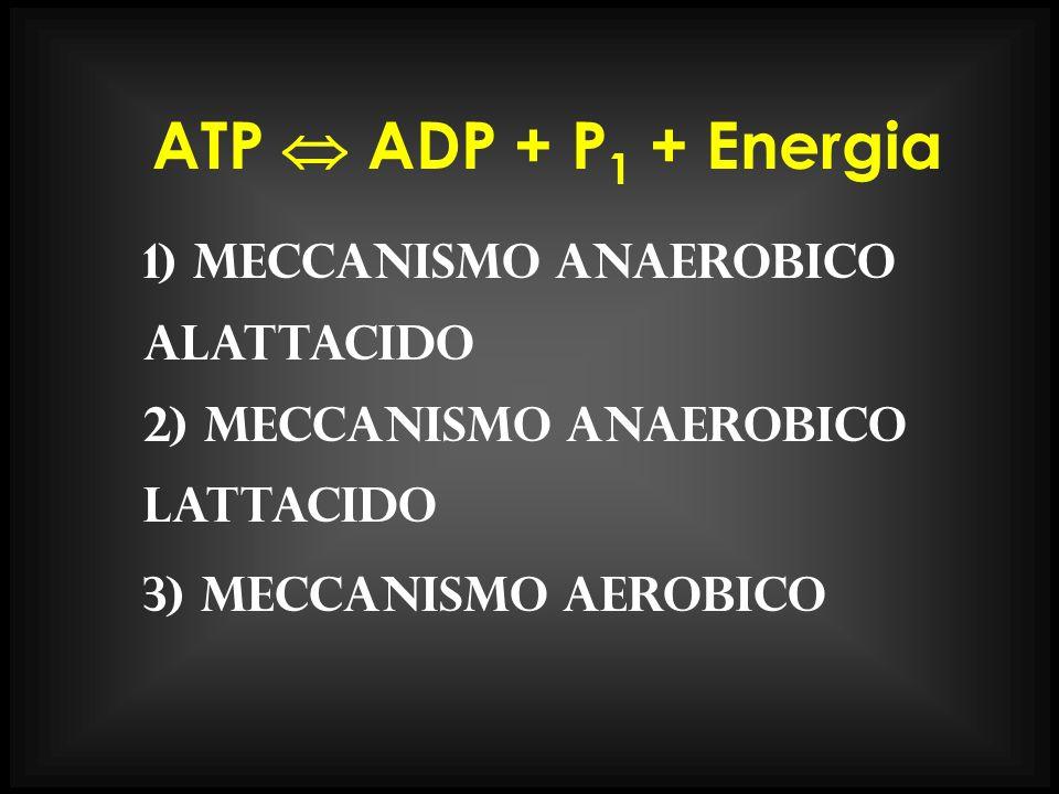 ATP ADP + P 1 + Energia 1) meccanismo anaerobico alattacido 2) meccanismo anaerobico lattacido 3) meccanismo aerobico