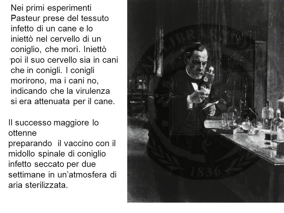 Nei primi esperimenti Pasteur prese del tessuto infetto di un cane e lo iniettò nel cervello di un coniglio, che morì. Iniettò poi il suo cervello sia