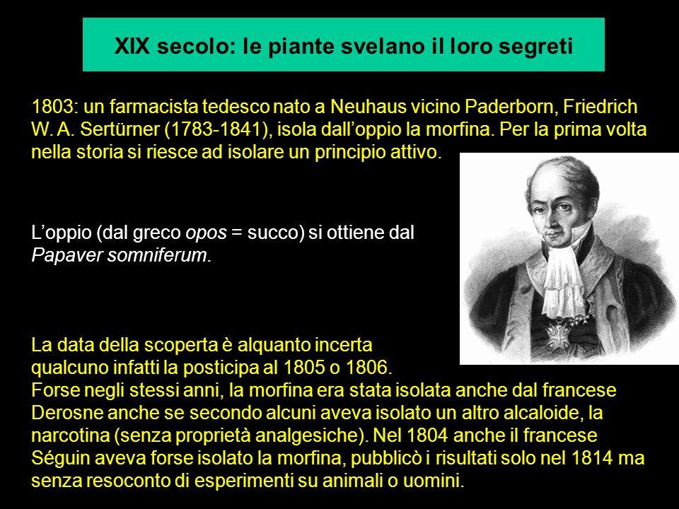 XIX secolo: le piante svelano il loro segreti 1803: un farmacista tedesco nato a Neuhaus vicino Paderborn, Friedrich W. A. Sertürner (1783-1841), isol