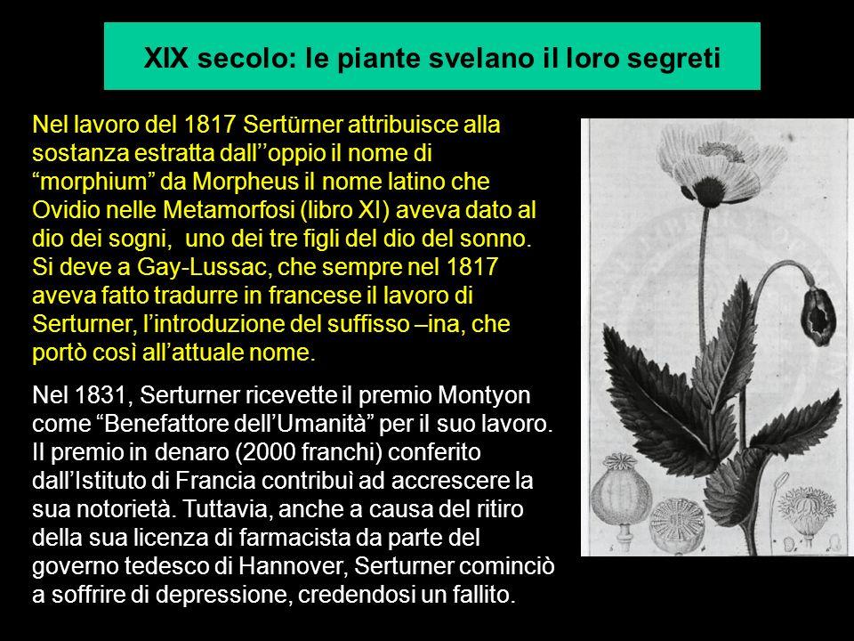 XIX secolo: le piante svelano il loro segreti Nel lavoro del 1817 Sertürner attribuisce alla sostanza estratta dalloppio il nome di morphium da Morphe