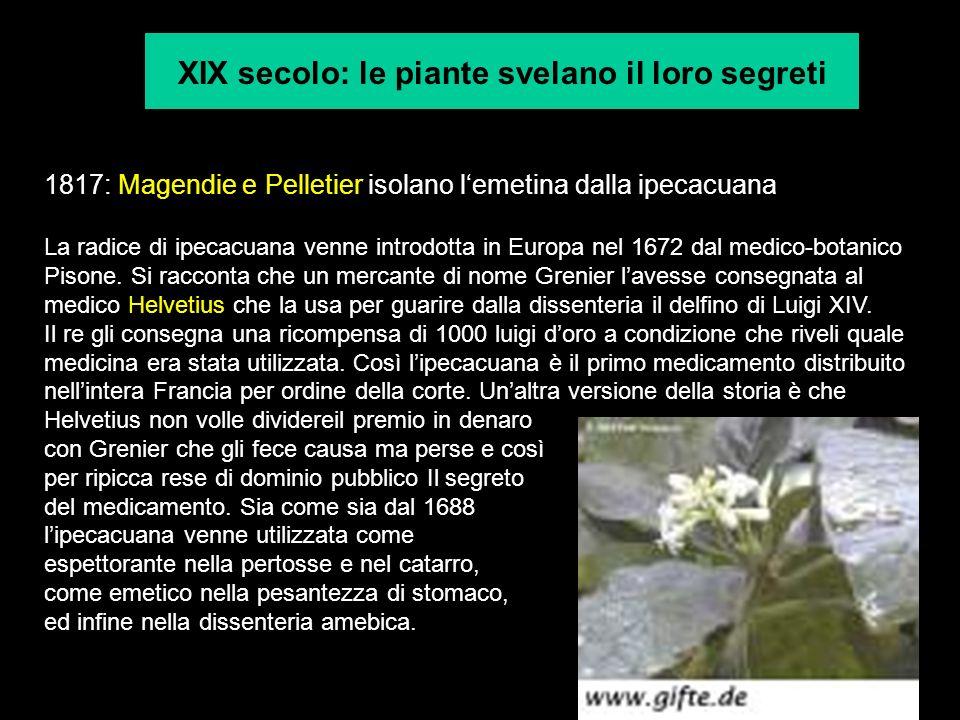 XIX secolo: le piante svelano il loro segreti 1817: Magendie e Pelletier isolano lemetina dalla ipecacuana La radice di ipecacuana venne introdotta in
