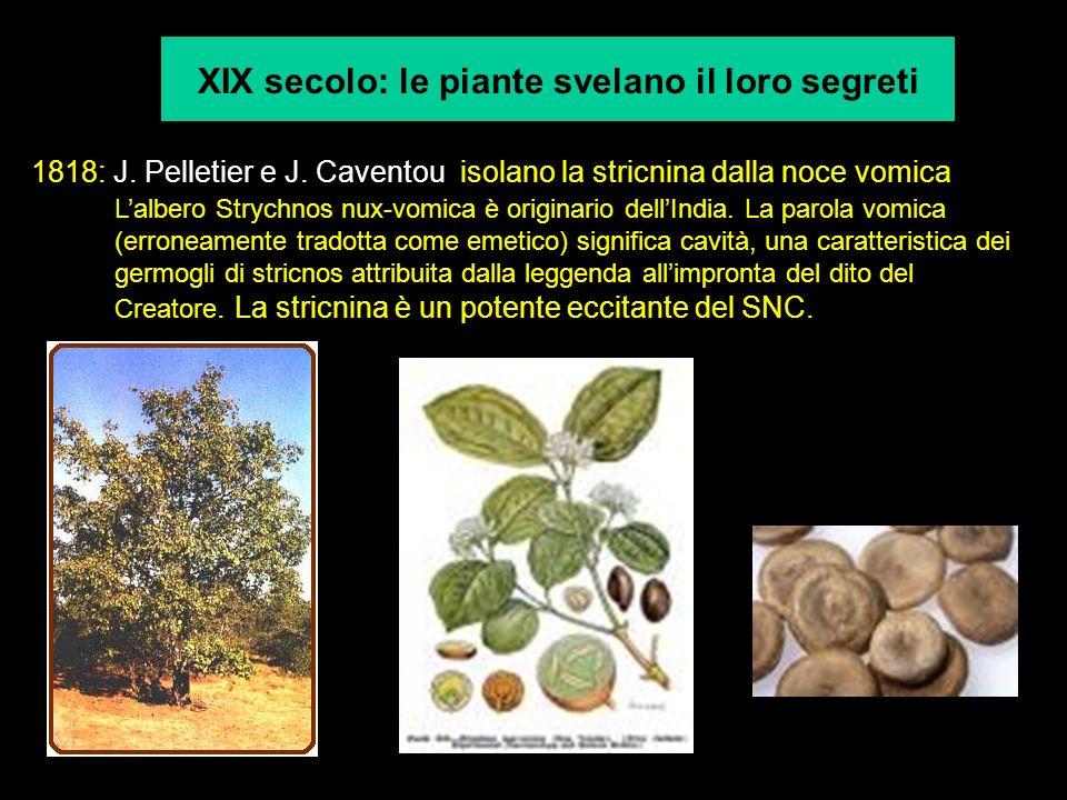 XIX secolo: le piante svelano il loro segreti 1818: J. Pelletier e J. Caventou isolano la stricnina dalla noce vomica Lalbero Strychnos nux-vomica è o