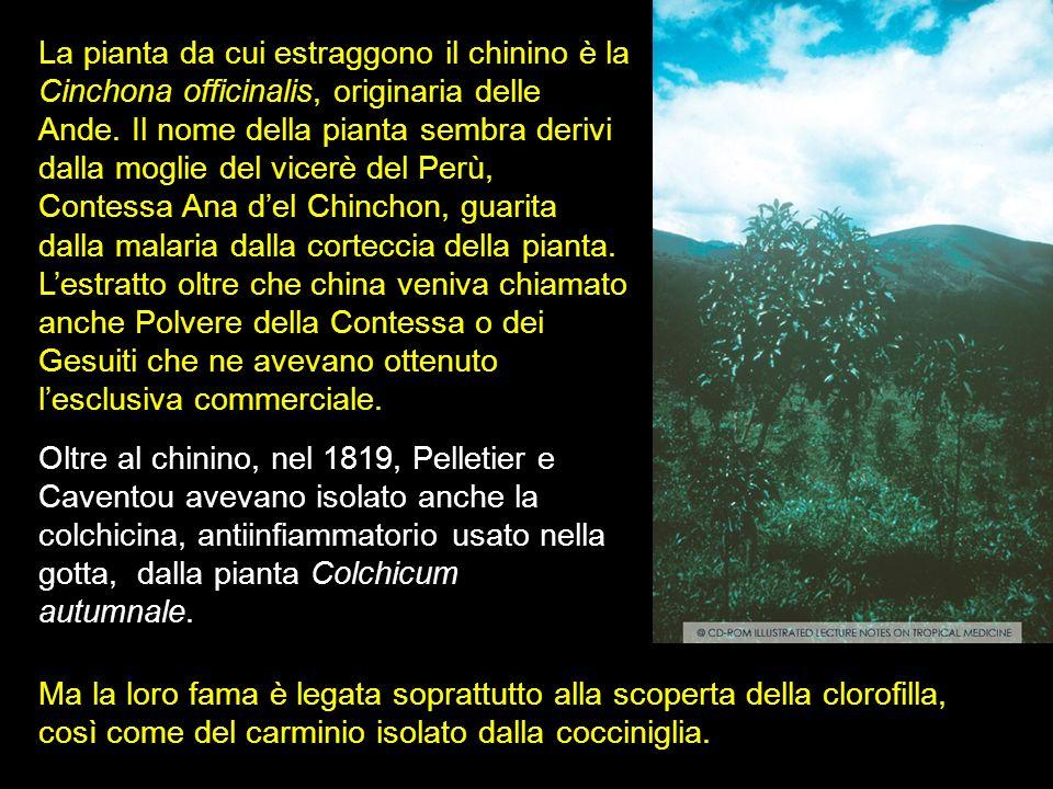 La pianta da cui estraggono il chinino è la Cinchona officinalis, originaria delle Ande. Il nome della pianta sembra derivi dalla moglie del vicerè de