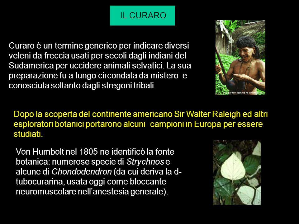 IL CURARO Curaro è un termine generico per indicare diversi veleni da freccia usati per secoli dagli indiani del Sudamerica per uccidere animali selva