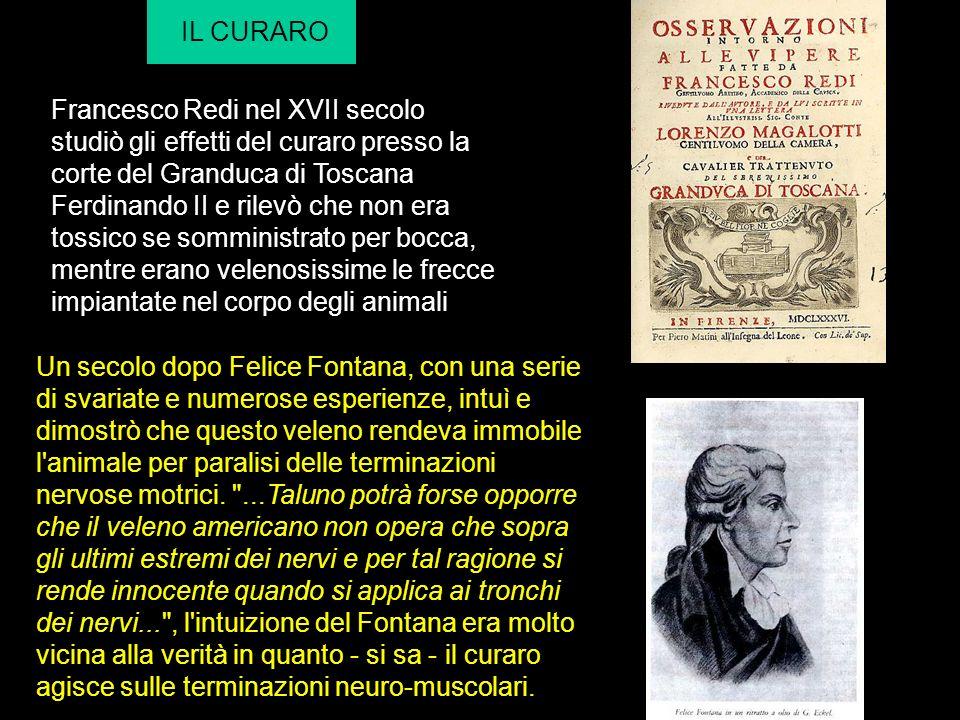IL CURARO Francesco Redi nel XVII secolo studiò gli effetti del curaro presso la corte del Granduca di Toscana Ferdinando II e rilevò che non era toss