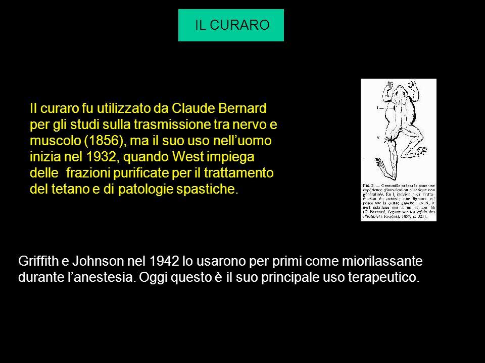 IL CURARO Il curaro fu utilizzato da Claude Bernard per gli studi sulla trasmissione tra nervo e muscolo (1856), ma il suo uso nelluomo inizia nel 193