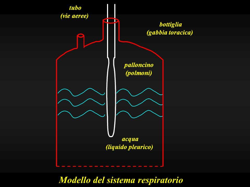 Modello del sistema respiratorio -4 Pressione intrapleurica Pressione intrapolmonare