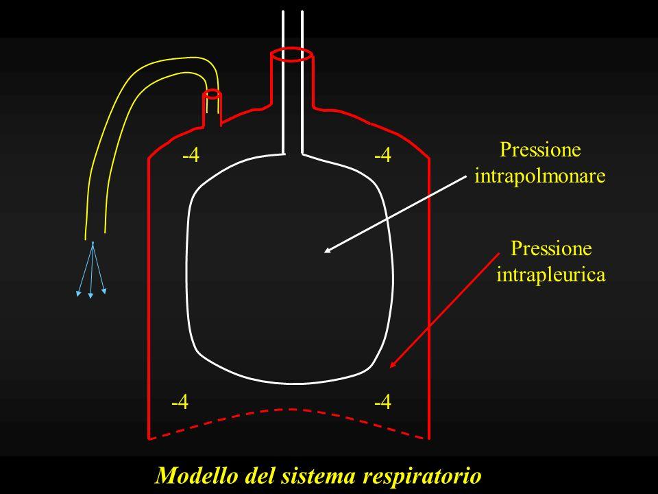 Tendenza dei polmoni a ritrarsi Tensione elastica: fibre elastiche parenchimatose, in costante stato di tensione Tensione superficiale: poiché gli alveoli, pieni di aria, sono bagnati da un sottile strato di acqua, si forma un interfaccia aria-liquido, che tende a ridurre la sua superficie