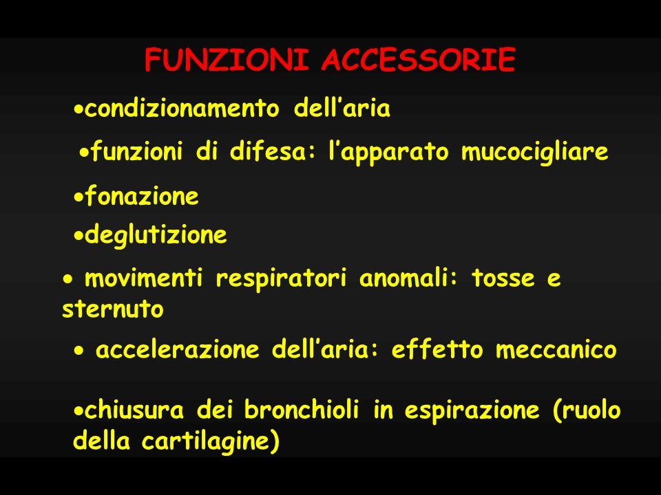 FUNZIONI ACCESSORIE chiusura dei bronchioli in espirazione (ruolo della cartilagine) condizionamento dellaria funzioni di difesa: lapparato mucociglia