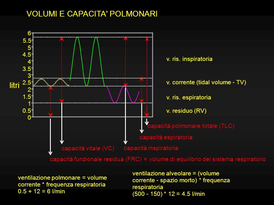 Quando la gabbia toracica non è soggetta a forze esterne, rimane ad un volume di equilibrio (CFR); per aumentare o diminuire tale volume intervengono normalmente i muscoli respiratori (principali ed accessori): MUSCOLI INSPIRATORI: intercostali esterni, diaframma; scaleni, sternocleidomastoidei.