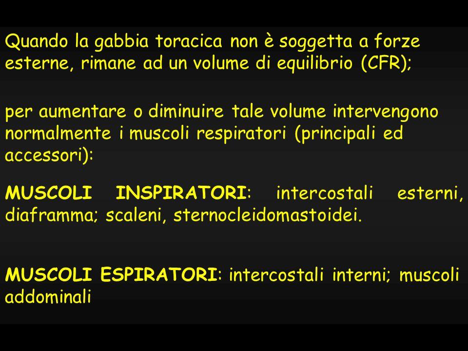 Intercostali esterni: inspirazione Intercostali interni: espirazione