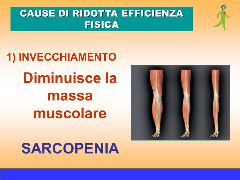 Diminuisce la massa muscolare SARCOPENIA 1) INVECCHIAMENTO CAUSE DI RIDOTTA EFFICIENZA FISICA