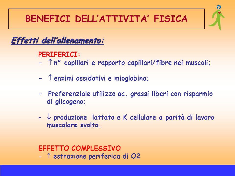 PERIFERICI: - n° capillari e rapporto capillari/fibre nei muscoli; - enzimi ossidativi e mioglobina; - Preferenziale utilizzo ac. grassi liberi con ri