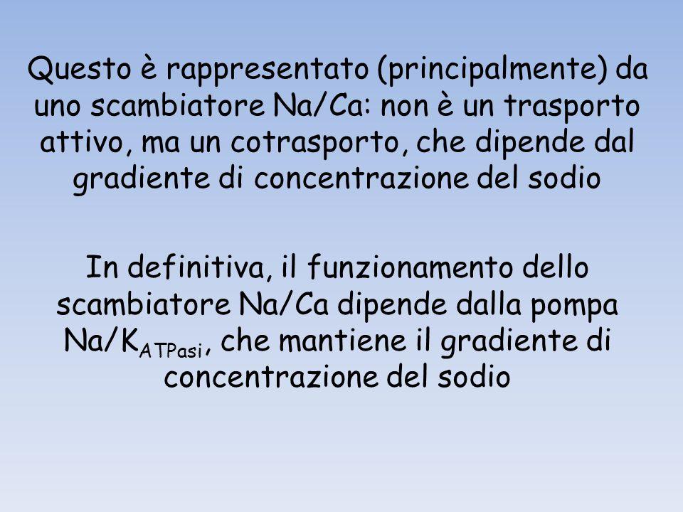 Questo è rappresentato (principalmente) da uno scambiatore Na/Ca: non è un trasporto attivo, ma un cotrasporto, che dipende dal gradiente di concentra