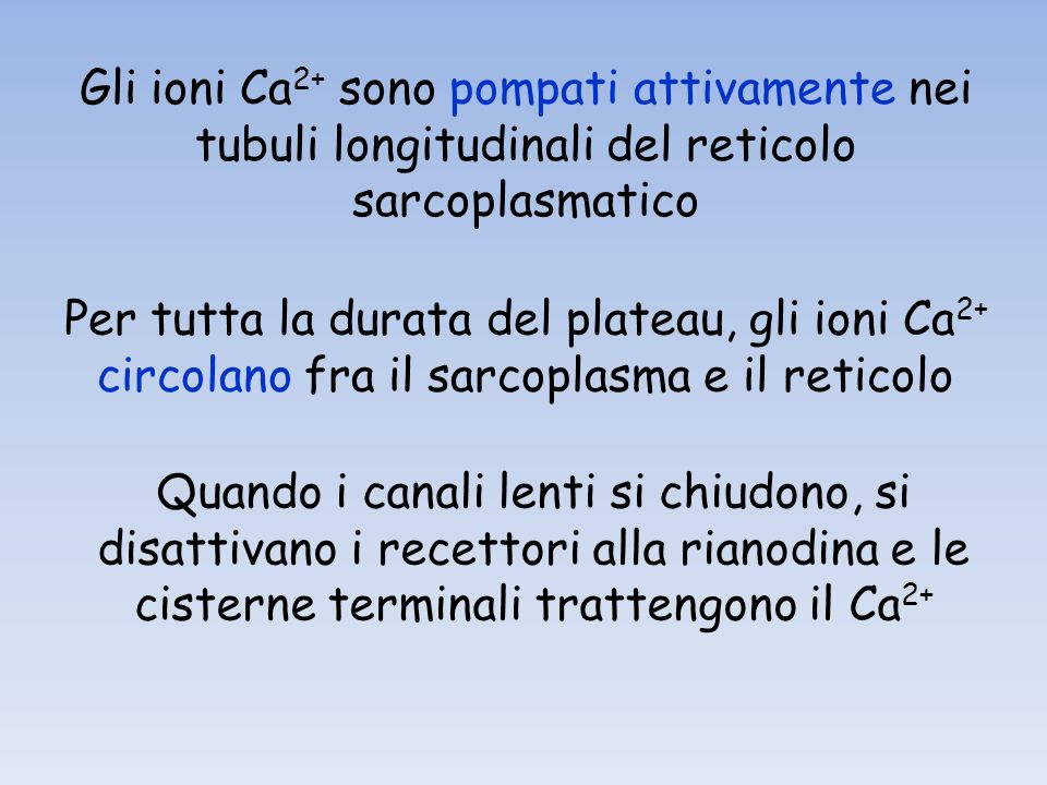 Gli ioni Ca 2+ sono pompati attivamente nei tubuli longitudinali del reticolo sarcoplasmatico Per tutta la durata del plateau, gli ioni Ca 2+ circolano fra il sarcoplasma e il reticolo Quando i canali lenti si chiudono, si disattivano i recettori alla rianodina e le cisterne terminali trattengono il Ca 2+