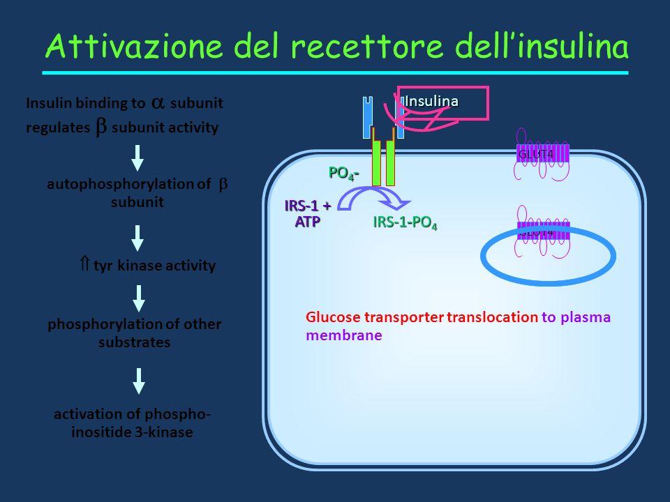 Recettore dellinsulina Recettori superfice cellulare: subunità siti di legame dellinsulina subunità con attività tirosina kinasi Membrana plasmatica