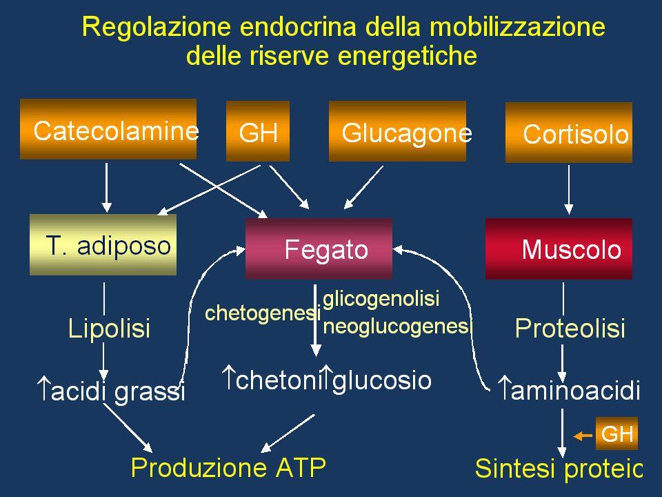 Insulina e doping: razionale Facilita lingresso del glucosio nelle cellule Stimola la glicogenosintesi – Aumenta la disponibilità di glicogeno increme