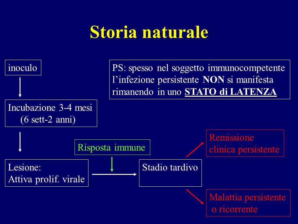 Storia naturale inoculo Incubazione 3-4 mesi (6 sett-2 anni) Lesione: Attiva prolif. virale Risposta immune Stadio tardivo Remissione clinica persiste