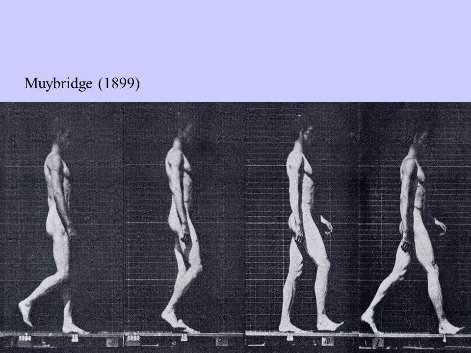 I movimenti normali e atipici In genere lassunzione che viene fatta è che: Un pattern motorio diverso cioe che si differenzia dal movimento normale, e da considerarsi negativo.