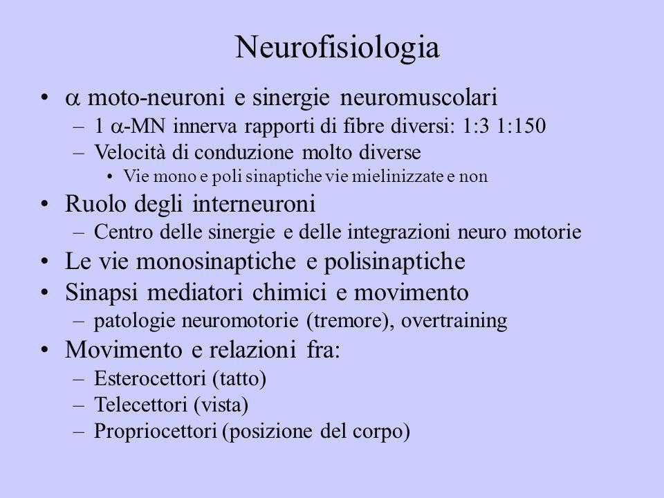 moto-neuroni e sinergie neuromuscolari –1 -MN innerva rapporti di fibre diversi: 1:3 1:150 –Velocità di conduzione molto diverse Vie mono e poli sinap