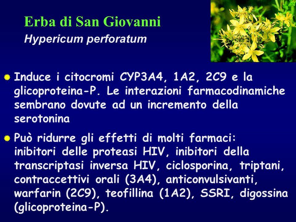 Erba di San Giovanni Hypericum perforatum Induce i citocromi CYP3A4, 1A2, 2C9 e la glicoproteina-P. Le interazioni farmacodinamiche sembrano dovute ad
