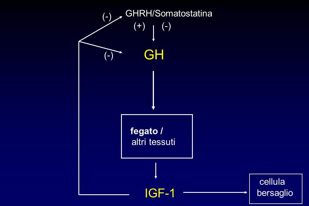 GH fegato / altri tessuti IGF-1 GHRH/Somatostatina (-) cellula bersaglio (-)(+)