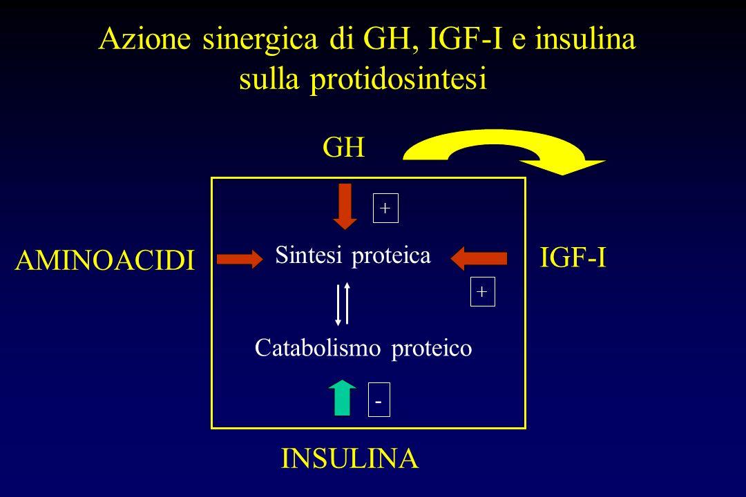 GH INSULINA glicemia sintesi proteica + ++ - Ipertrofia muscolare DOPING COMBINATO GH + INSULINA