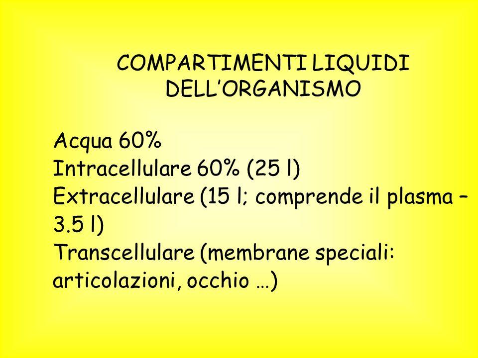 COMPARTIMENTI LIQUIDI DELLORGANISMO Acqua 60% Intracellulare 60% (25 l) Extracellulare (15 l; comprende il plasma – 3.5 l) Transcellulare (membrane speciali: articolazioni, occhio …)