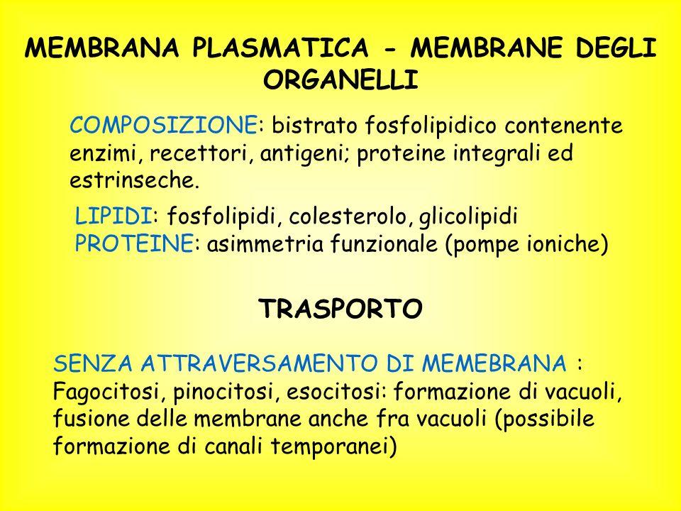 MEMBRANA PLASMATICA - MEMBRANE DEGLI ORGANELLI COMPOSIZIONE: bistrato fosfolipidico contenente enzimi, recettori, antigeni; proteine integrali ed estrinseche.