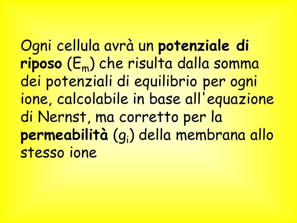 Ogni cellula avrà un potenziale di riposo (E m ) che risulta dalla somma dei potenziali di equilibrio per ogni ione, calcolabile in base all equazione di Nernst, ma corretto per la permeabilità (g i ) della membrana allo stesso ione