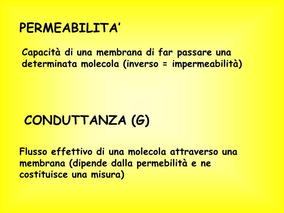 PERMEABILITA CONDUTTANZA (G) Capacità di una membrana di far passare una determinata molecola (inverso = impermeabilità) Flusso effettivo di una molecola attraverso una membrana (dipende dalla permebilità e ne costituisce una misura)