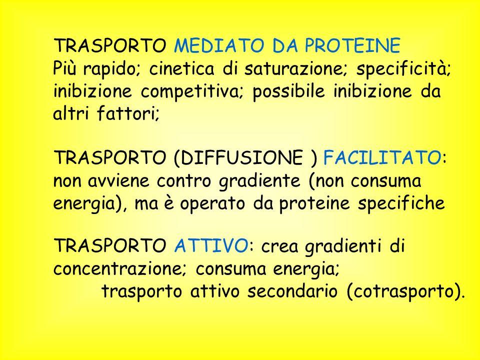 TRASPORTO MEDIATO DA PROTEINE Più rapido; cinetica di saturazione; specificità; inibizione competitiva; possibile inibizione da altri fattori; TRASPORTO (DIFFUSIONE ) FACILITATO: non avviene contro gradiente (non consuma energia), ma è operato da proteine specifiche TRASPORTO ATTIVO: crea gradienti di concentrazione; consuma energia; trasporto attivo secondario (cotrasporto).