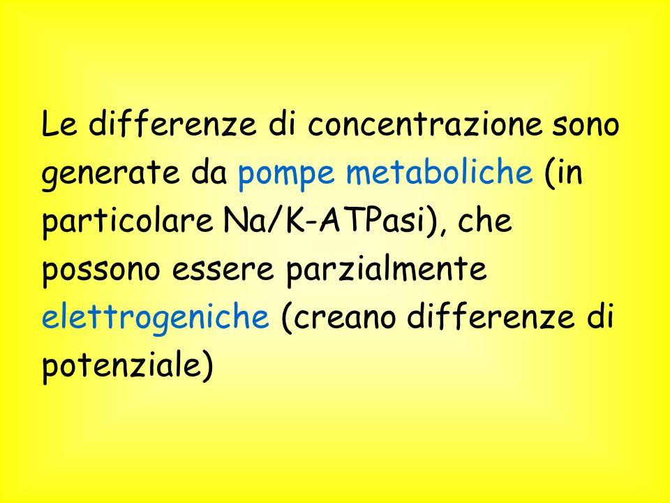 Le differenze di concentrazione sono generate da pompe metaboliche (in particolare Na/K-ATPasi), che possono essere parzialmente elettrogeniche (creano differenze di potenziale)