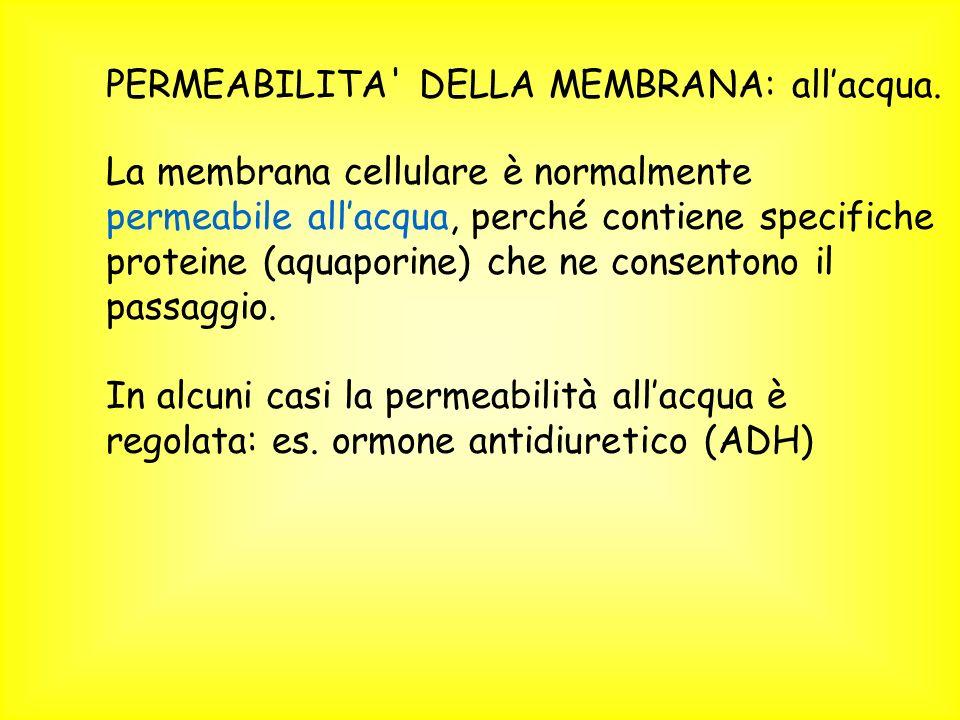 PERMEABILITA' DELLA MEMBRANA: allacqua. La membrana cellulare è normalmente permeabile allacqua, perché contiene specifiche proteine (aquaporine) che