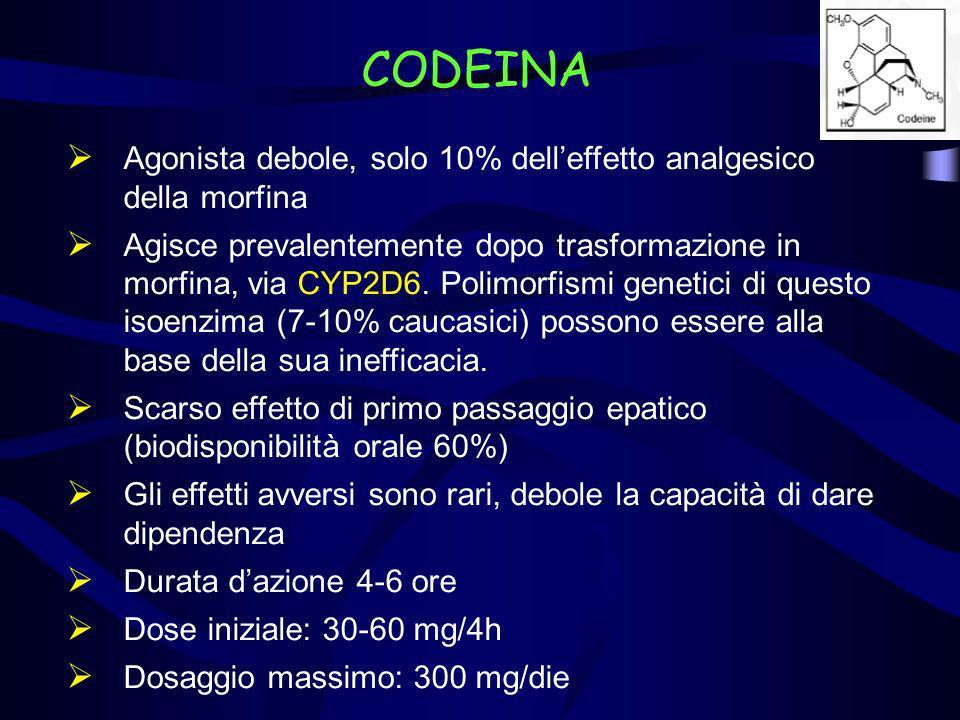 CODEINA Agonista debole, solo 10% delleffetto analgesico della morfina Agisce prevalentemente dopo trasformazione in morfina, via CYP2D6. Polimorfismi