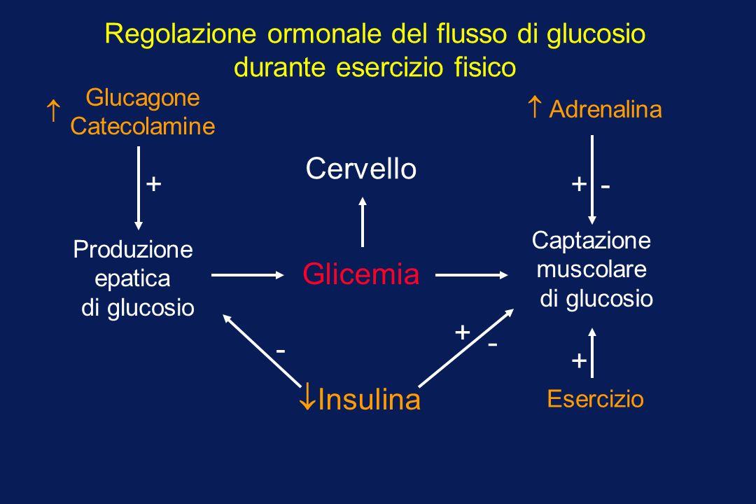 Produzione epatica di glucosio Glicemia Captazione muscolare di glucosio Cervello Regolazione ormonale del flusso di glucosio durante esercizio fisico