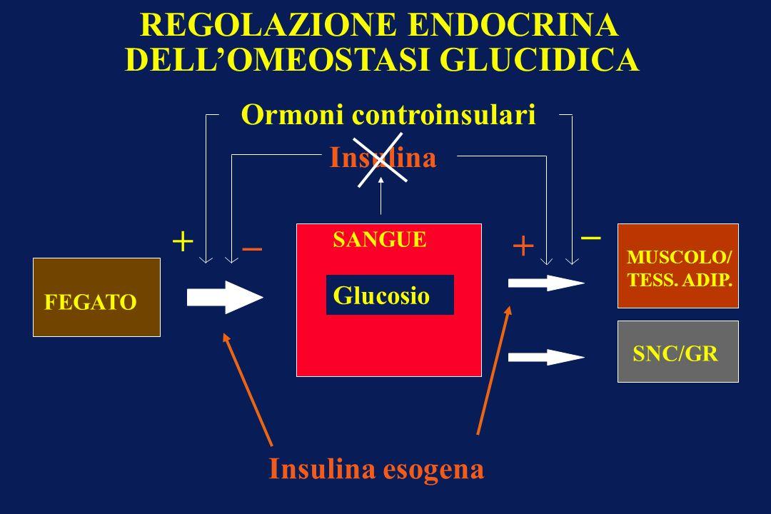 FEGATO Glucosio SANGUE SNC/GR MUSCOLO/ TESS. ADIP. Ormoni controinsulari Insulina _ + _ + REGOLAZIONE ENDOCRINA DELLOMEOSTASI GLUCIDICA Insulina esoge
