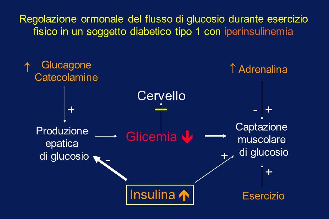 Glucagone Catecolamine Adrenalina Produzione epatica di glucosio Glicemia Esercizio Captazione muscolare di glucosio Cervello Regolazione ormonale del
