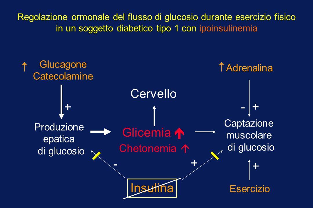 Glucagone Catecolamine Adrenalina Produzione epatica di glucosio Glicemia Insulina Esercizio Captazione muscolare di glucosio Cervello Regolazione orm