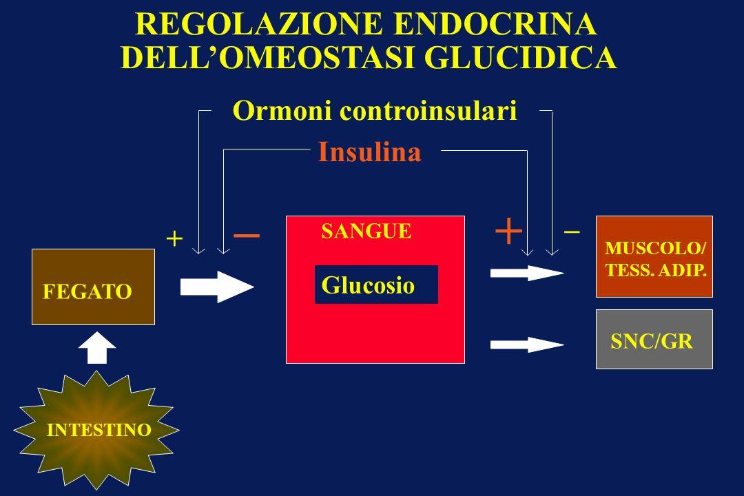 FEGATO Glucosio SANGUE SNC/GR INTESTINO MUSCOLO/ TESS. ADIP. Ormoni controinsulari Insulina _ + _ + REGOLAZIONE ENDOCRINA DELLOMEOSTASI GLUCIDICA