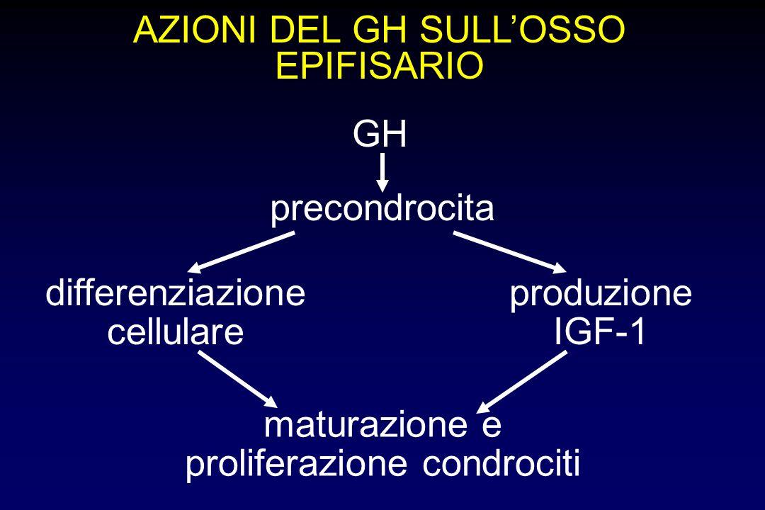 EFFETTI GENERALI DEL SISTEMA GH/IGF-I - Effetti sul metabolismo osseo stimolo condrogenesi stimolo apposizione ossea aumento assorbimento intestinale